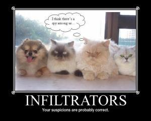 INFILTRATORS CATS