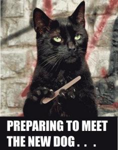 cat preparing to meet the new dog