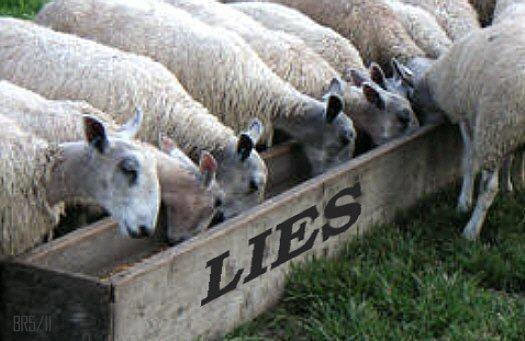 sheep and lies