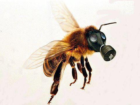 Ask About Radioactive Pollen Now