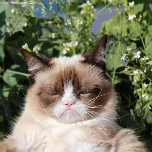 Grumpy Cat uncaptioned